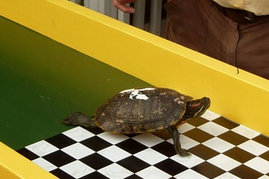 Photo of Key West Turtle Races