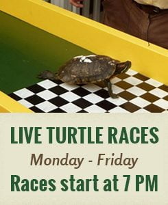 Live Turtle Races Monday thru Friday